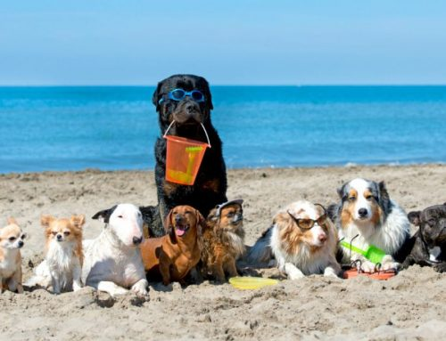 List of beaches for dogs 🐶 in Malaga